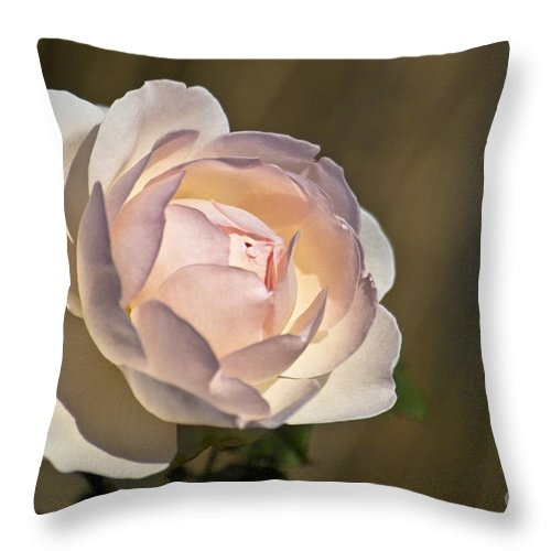 Rose Throw Pillow featuring the photograph Pink Rose Blossom by Heiko Koehrer-Wagner