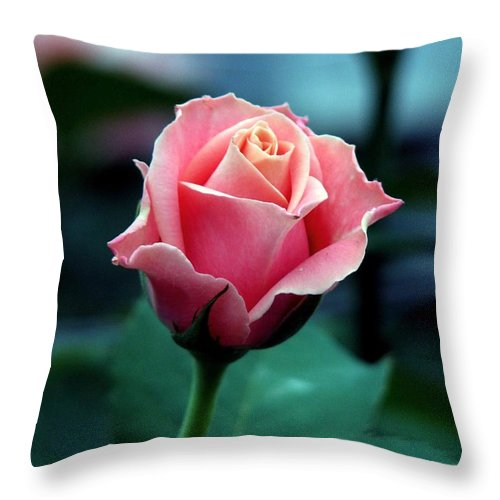 Rose Throw Pillow featuring the photograph Pink Rose by Mark Michel