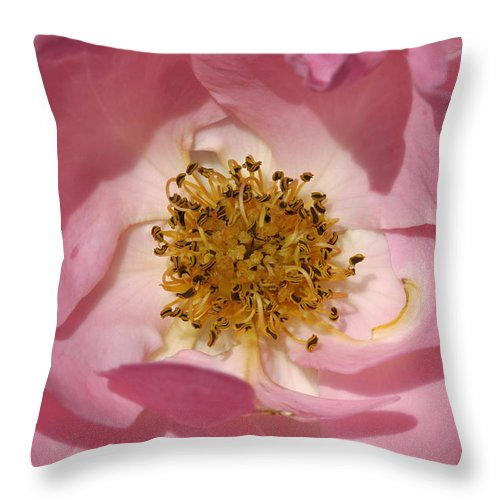 Rose Throw Pillow featuring the photograph Pink Rose by Matthias Hauser