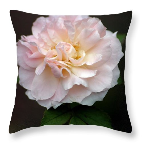 Roses Throw Pillow featuring the photograph Pink Ruffles by Living Color Photography Lorraine Lynch