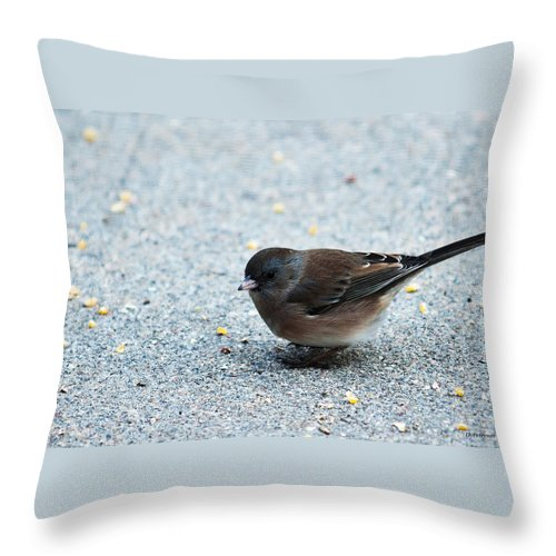 Heron Heaven Throw Pillow featuring the photograph Pink-sided Junco by Edward Peterson