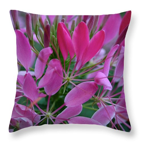 Outdoors Throw Pillow featuring the photograph Pink Spider Flower by Susan Herber
