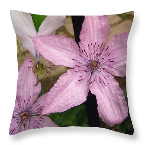 Flowers Throw Pillow featuring the photograph Pink Stars by Stephanie Moore