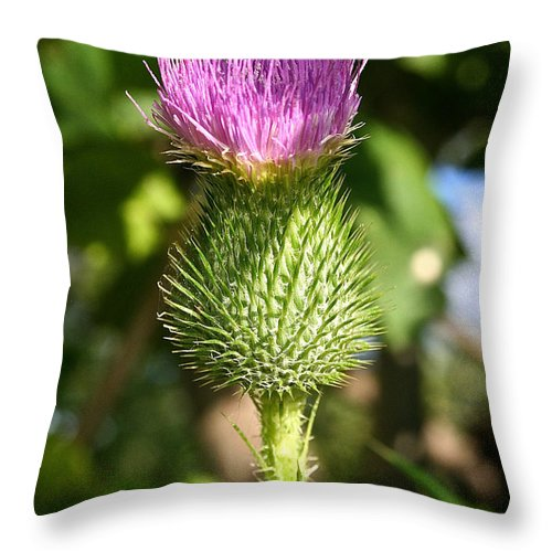 Outdoors Throw Pillow featuring the photograph Pink Top by Susan Herber