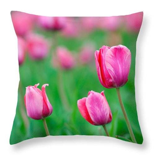 Pink Throw Pillow featuring the photograph Pink Tulip Bed by Constance Sanders