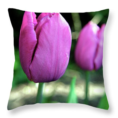 Tulips Throw Pillow featuring the photograph Pink Tulips by Vicki Field