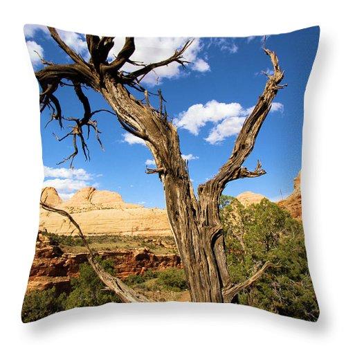 Pinwheel Throw Pillow featuring the photograph Pinwheel Tree by Adam Jewell