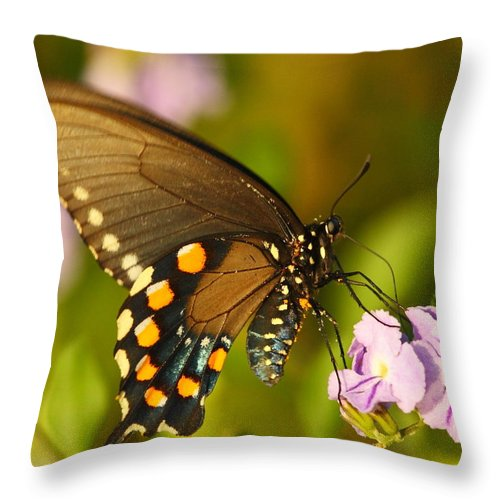 Pipevine Swallowtail Throw Pillow featuring the photograph Pipevine Swallowtail Butterfly by Andrew McInnes