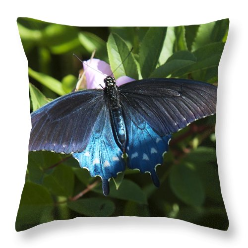 Nature Throw Pillow featuring the photograph Pipevine Swallowtail Din003 by Gerry Gantt