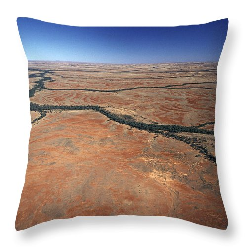 Cling To Life Throw Pillow featuring the photograph Plants Grow Along Desert River Drainage by Jason Edwards
