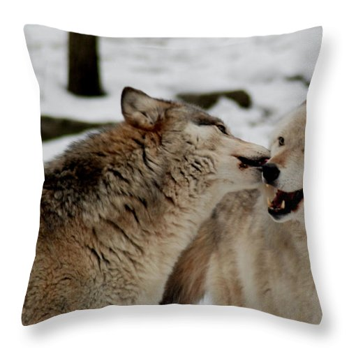 Wolf Throw Pillow featuring the photograph Playful Wolves by Richard Bryce and Family