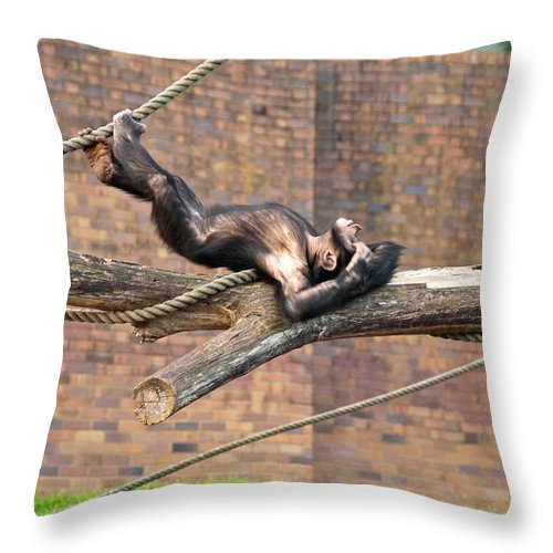 Photograph Throw Pillow featuring the photograph Playing Chimp I by Bob and Nancy Kendrick