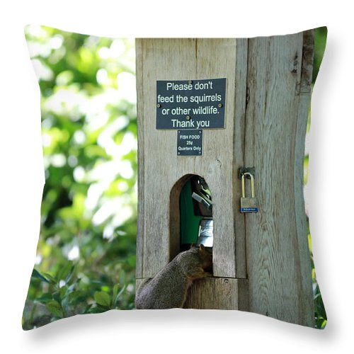 Squirrel Throw Pillow featuring the photograph Please Don't Feed The Squirrels by Elizabeth Hart