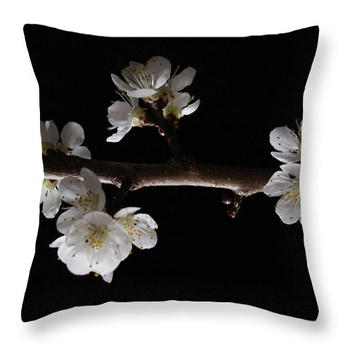 Plum Throw Pillow featuring the photograph Plum Tree Spring Blossum by Nancy Griswold