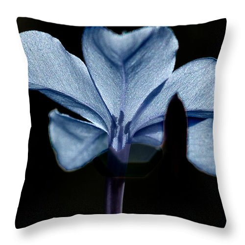 Flower Throw Pillow featuring the photograph Plumbago Close Up by David Resnikoff