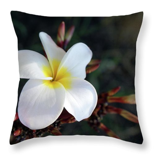 Plumeria Throw Pillow featuring the photograph Plumeria by Ernie Echols