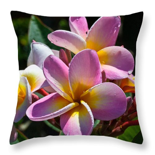 Plumerias Flowers Maui Hawaii Colors Throw Pillow featuring the photograph Plumerias by James Roemmling