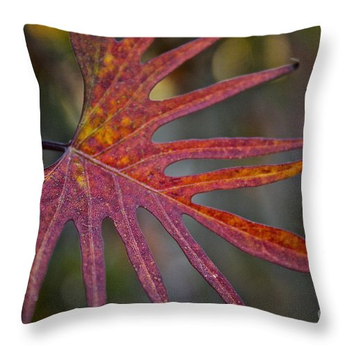 Outdoors Throw Pillow featuring the photograph Pointedly by Susan Herber