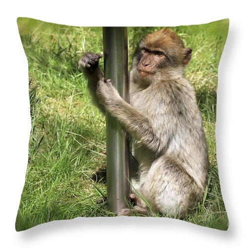 Monkey Throw Pillow featuring the photograph Pole Dancing Macaque Style by Teresa Zieba
