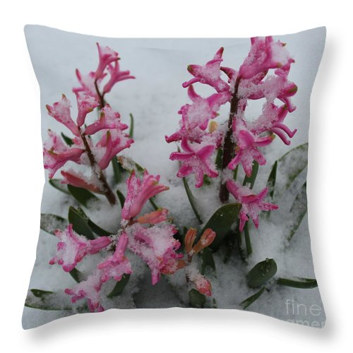 Hyacinth Throw Pillow featuring the photograph Poor Hyacinth by Stephanie Kripa