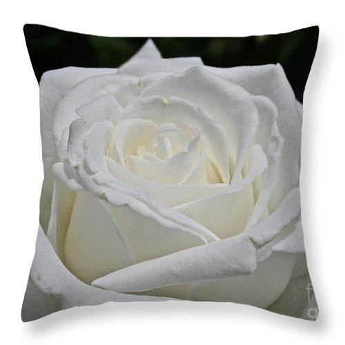 Outdoors Throw Pillow featuring the photograph Pope's Rose by Susan Herber