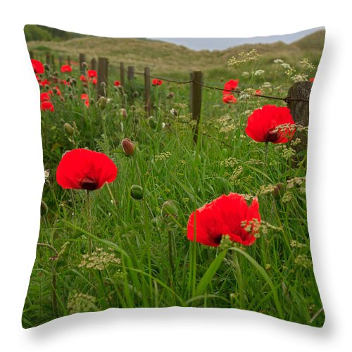 Poppies Throw Pillow featuring the photograph Poppies By The Roadside In Northumberland by Louise Heusinkveld