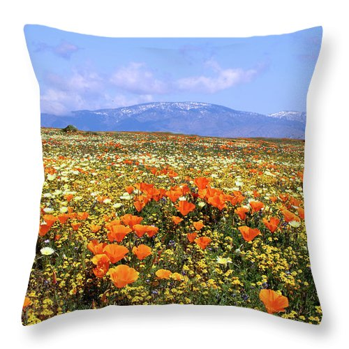 Antelope Valley Throw Pillow featuring the photograph Poppies Over The Mountain by Peter Tellone