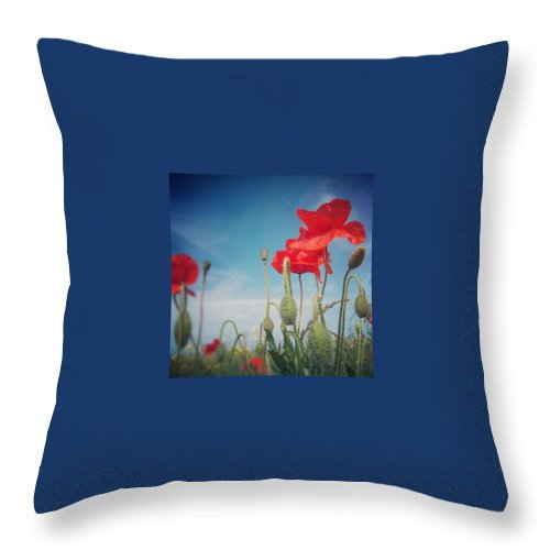 Poppy Throw Pillow featuring the photograph Poppies by Vicki Field