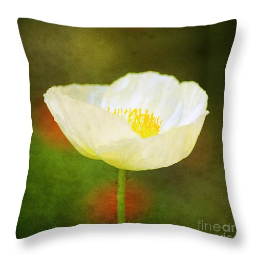 Alpine Throw Pillow featuring the photograph Poppy Of White by Darren Fisher