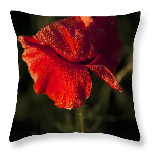 Flowres Throw Pillow featuring the photograph Poppy by Svetlana Sewell