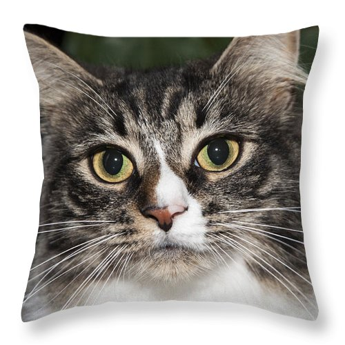 Cat Throw Pillow featuring the photograph Portrait Of A Cat With Two Toned Eyes by Jeannette Hunt