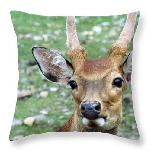Deer Throw Pillow featuring the photograph Portrait Of A Deer by Wanda Brandon