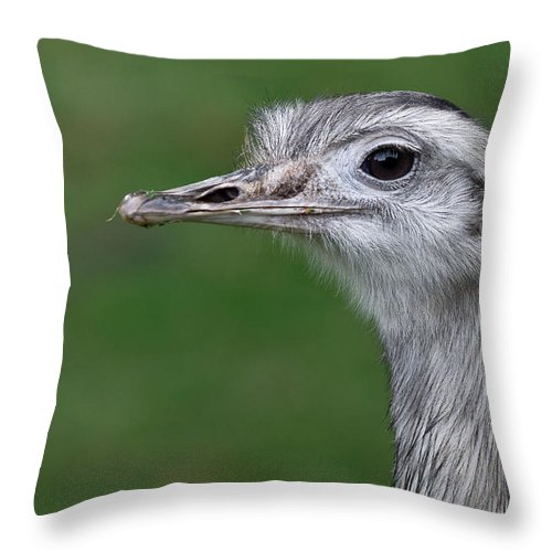 Rhea Throw Pillow featuring the photograph Portrait Of A Rhea by Greg Nyquist