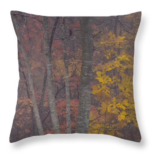 Red Leaves Photographs Throw Pillow featuring the photograph Portrait Of Autumn by Rob Travis
