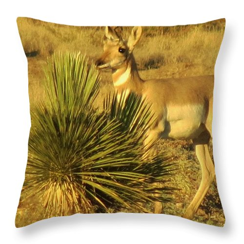 Pronghorn Throw Pillow featuring the photograph Posing Pronghorn by Feva Fotos