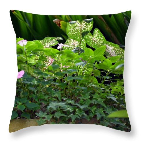 Potted Throw Pillow featuring the photograph Potted Shades Of Green by Maria Urso