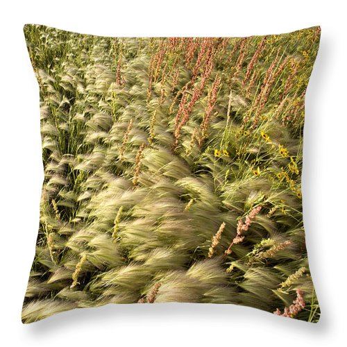 Crop Throw Pillow featuring the photograph Prairie Crop With Weeds by Mark Duffy