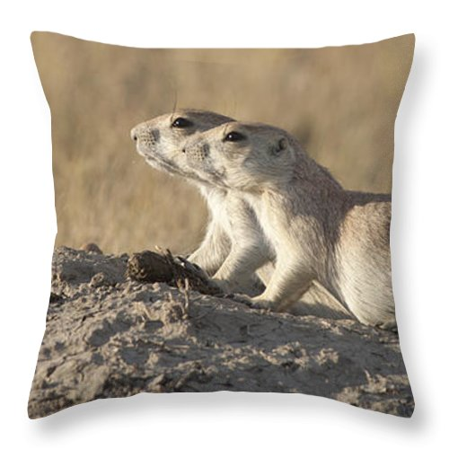 Mp Throw Pillow featuring the photograph Prairie Dog Pair Grasslands Np by Matthias Breiter