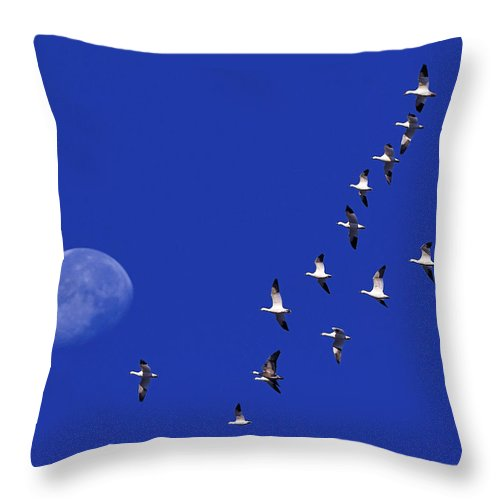 Snow Goose Throw Pillow featuring the photograph Prairie Migration by Tony Beck
