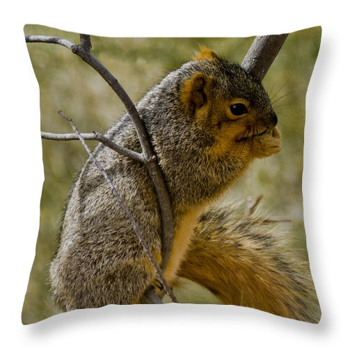 Usa Throw Pillow featuring the photograph Praying Squirrel by LeeAnn McLaneGoetz McLaneGoetzStudioLLCcom