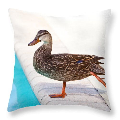Pool Throw Pillow featuring the photograph Pre Swim Stretch by Michelle Constantine