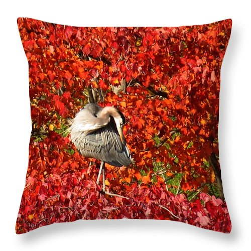 Great Blue Heron Throw Pillow featuring the photograph Preening by Rrrose Pix