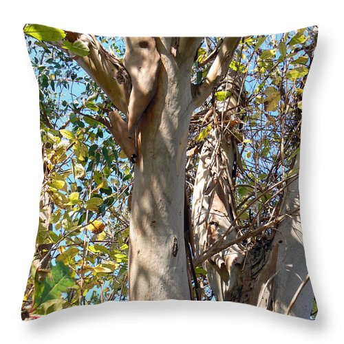 Tree Throw Pillow featuring the photograph Preparing For Renewal by Pamela Patch