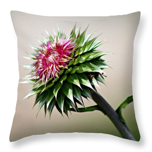 Thistle Throw Pillow featuring the photograph Pretty But Painful II by Monica Wheelus
