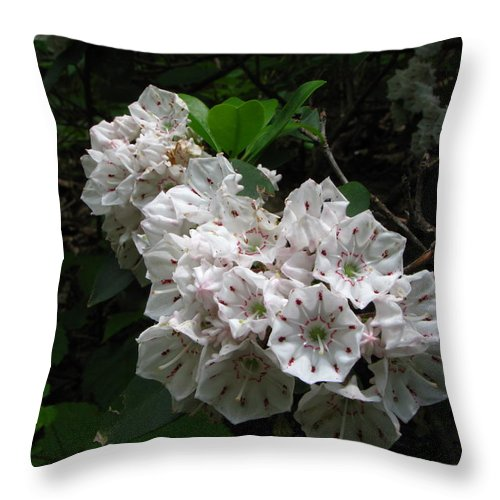 White Flowers Throw Pillow featuring the photograph Pretty In White by Todd Schworm