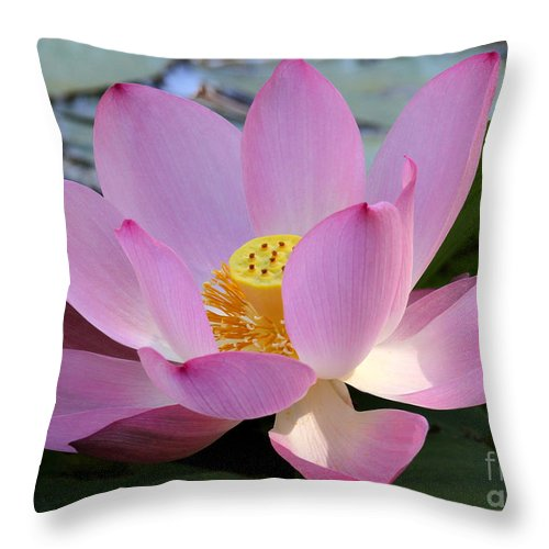 Landscape Throw Pillow featuring the photograph Pretty Pink Lotus by Sabrina L Ryan
