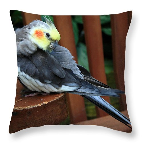 Bird Throw Pillow featuring the photograph Pretty Polly by Burney Lieberman
