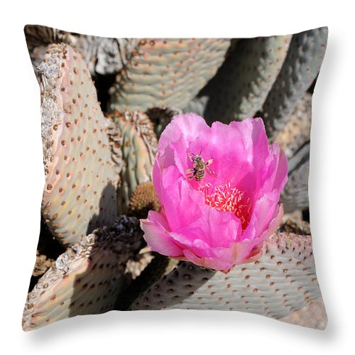Fertilize Throw Pillow featuring the photograph Prickly Pear Cactus Fertilized By Honey Bee by Gary Whitton