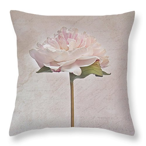 Paeonia Throw Pillow featuring the photograph Pride by Claudia Moeckel
