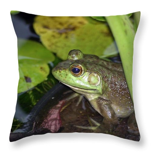 Frog Throw Pillow featuring the photograph Prince Charming by Living Color Photography Lorraine Lynch